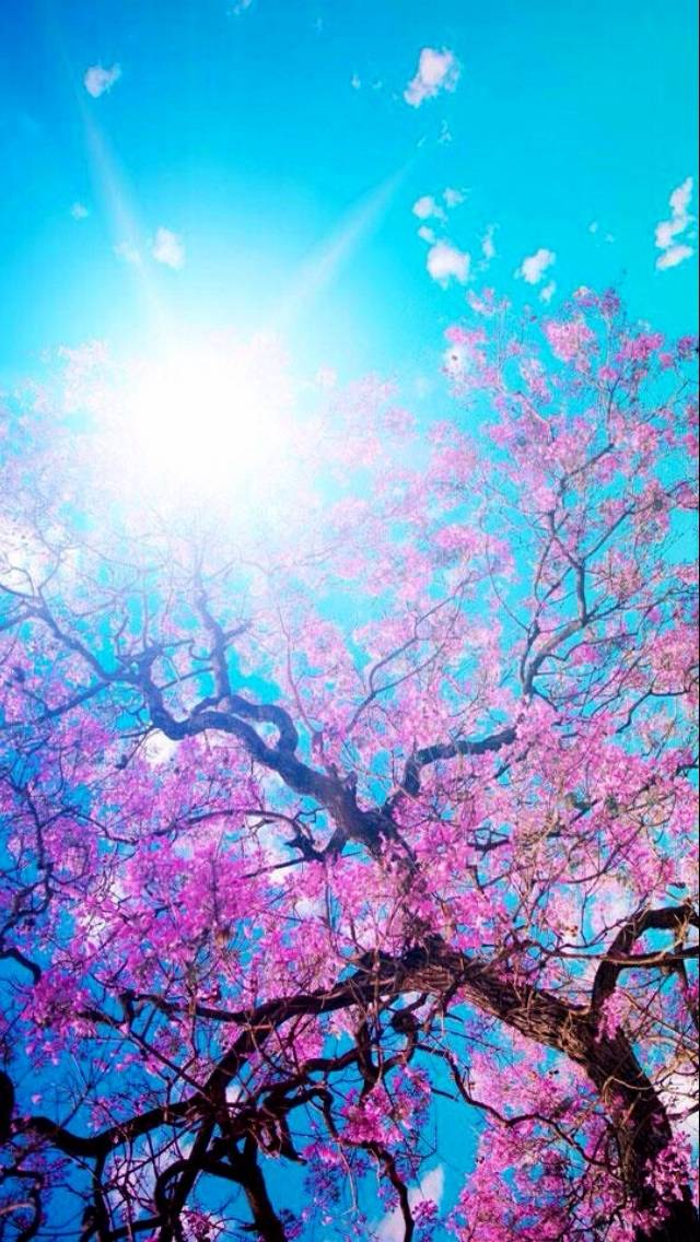 Japanese Tree Wallpaper By Chrismikeshaw 4a Free On Zedge