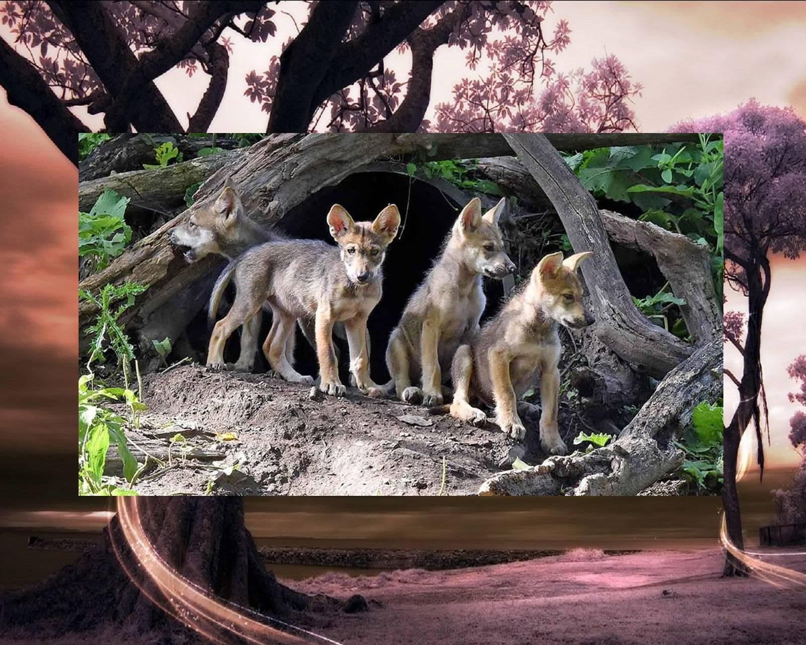 Little Wolf Pack