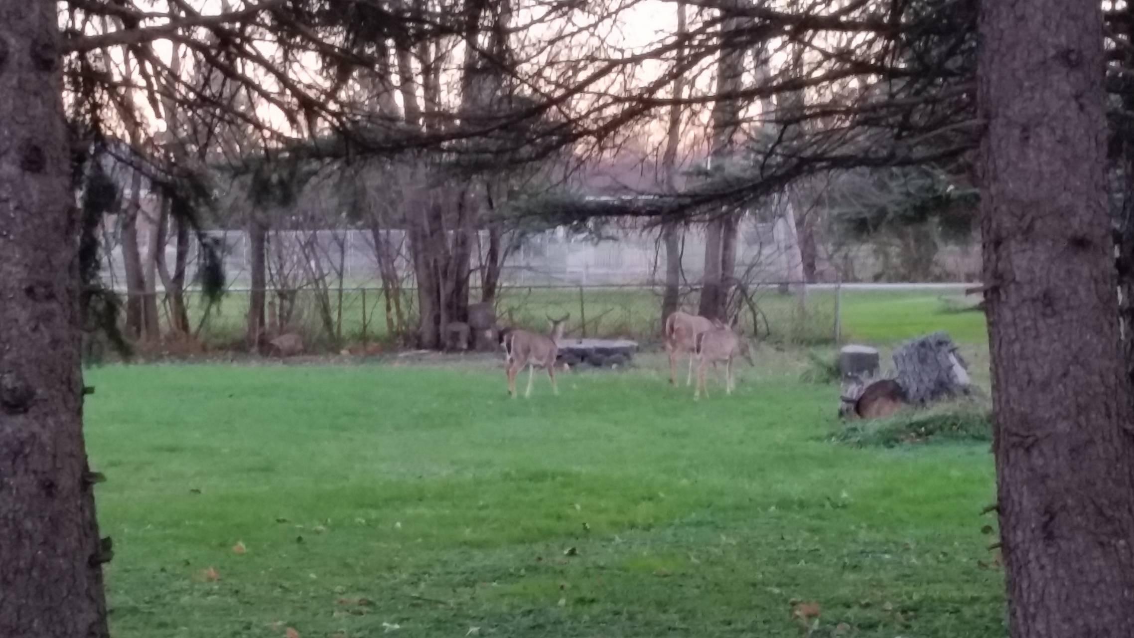 Evening visitors