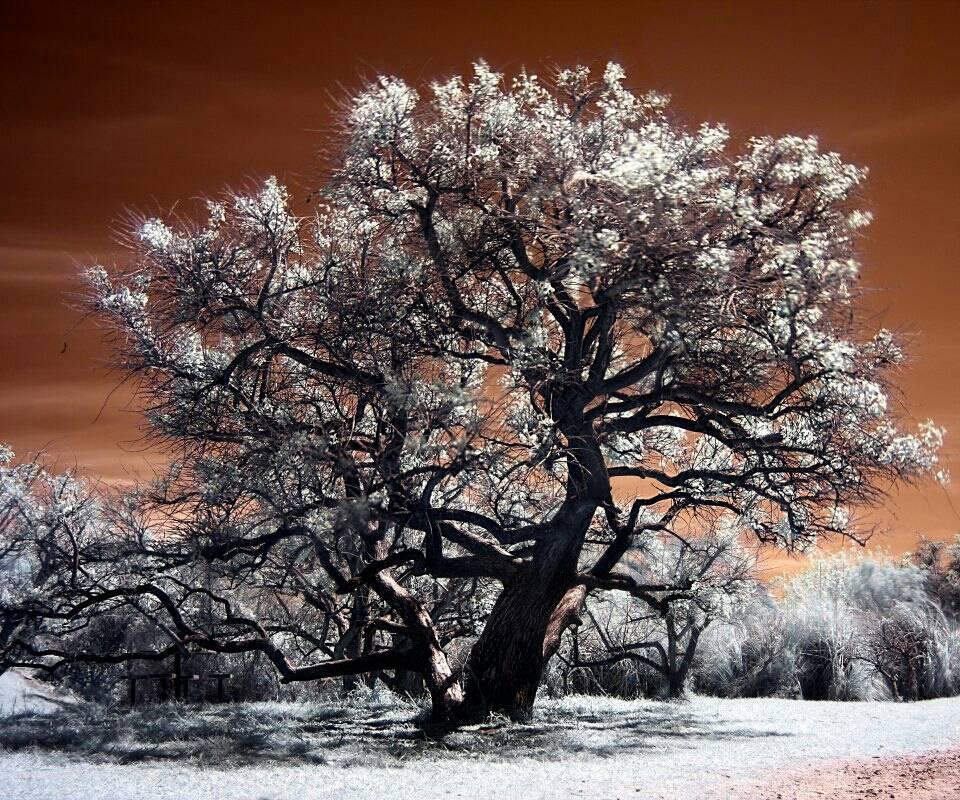 Bronze Winter Tree