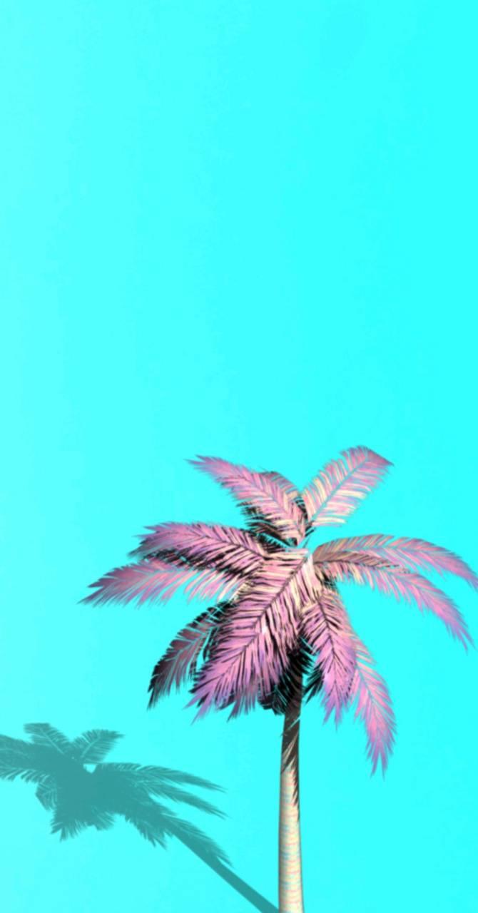 Pink palmtree