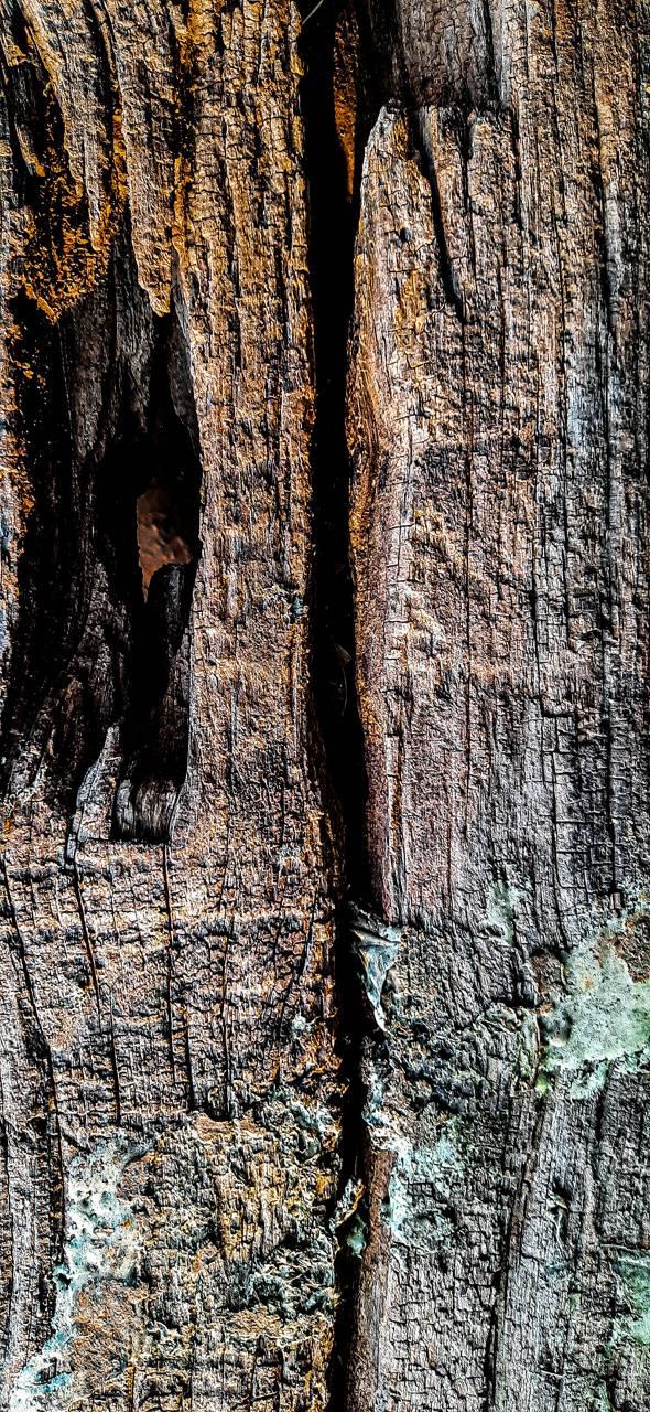 Wooden wallpapers
