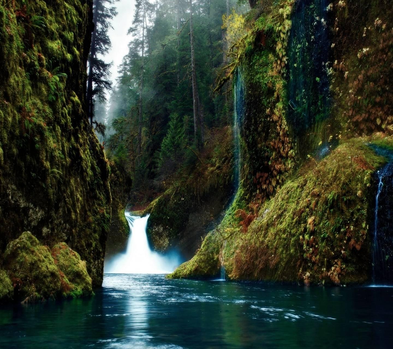 Evergreen Nature