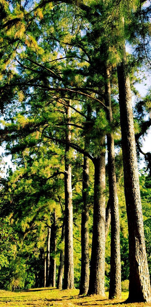 Tree Line View