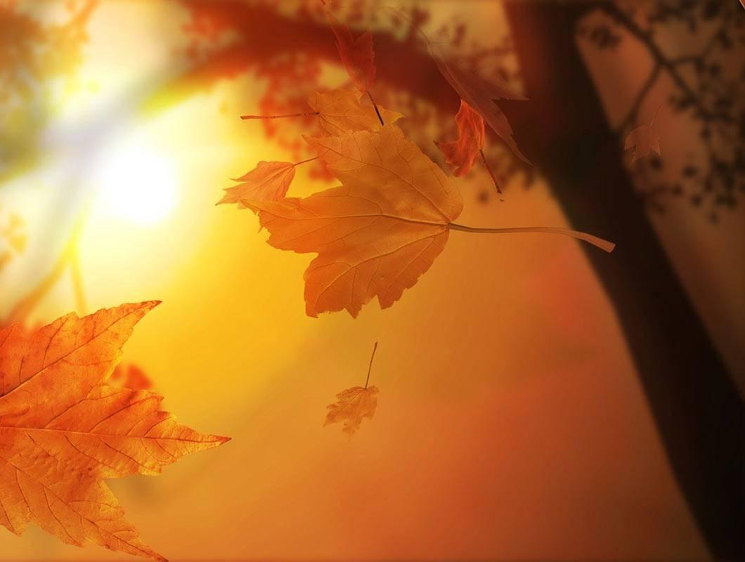 Autumnmaplesunset