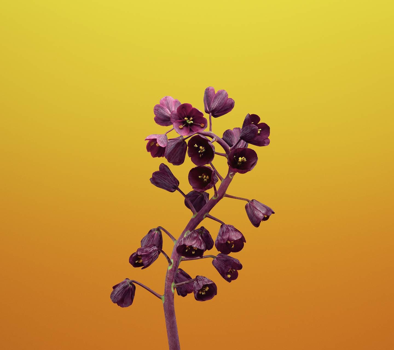 flower minimal