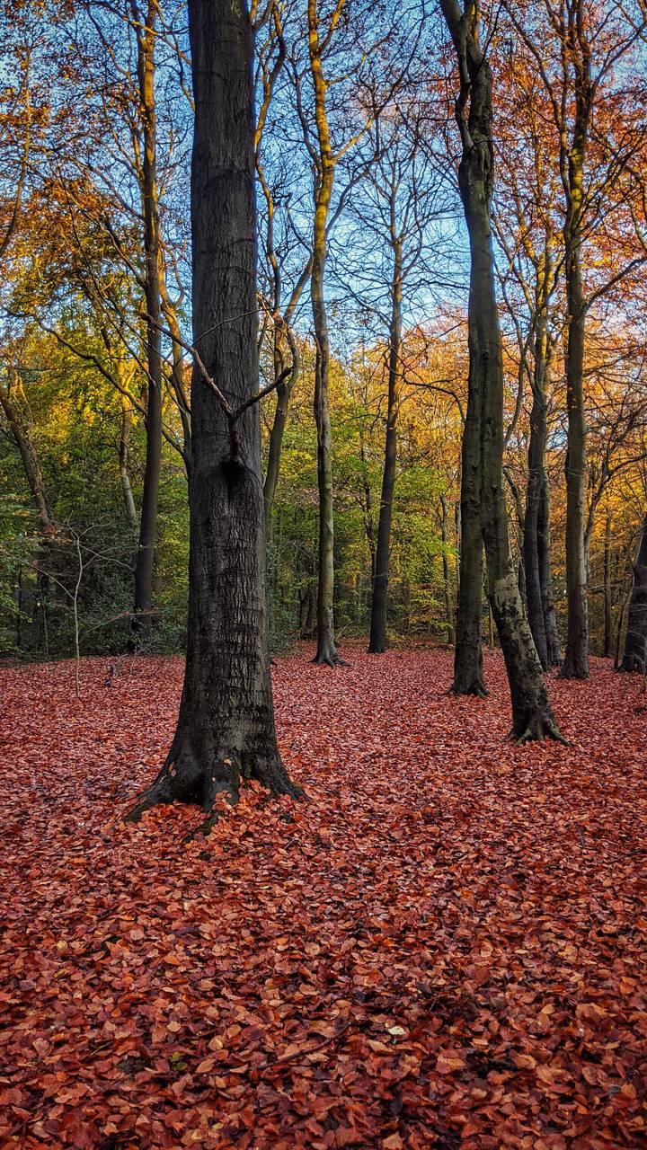 Autumn forest fire