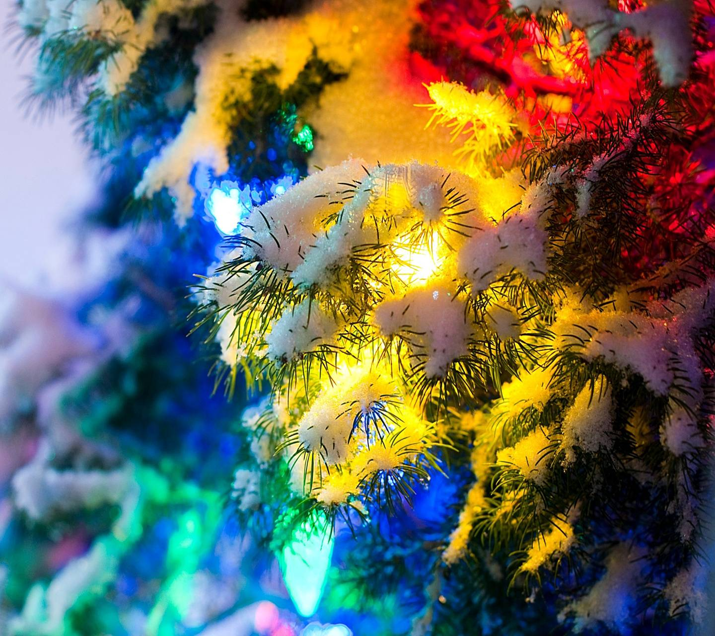 colored xmas lights