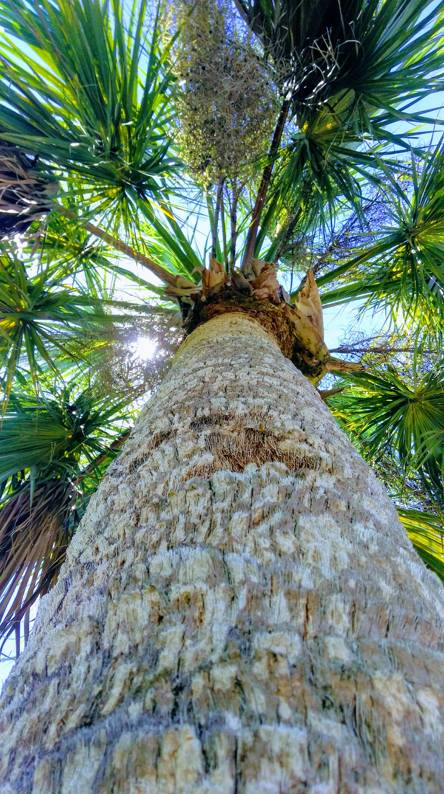 Lookin up the Palm