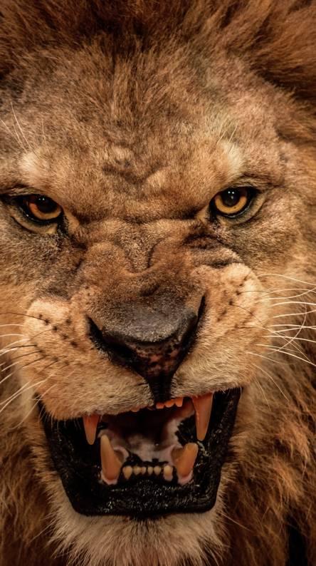 99 Angry Lion Face Wallpaper Iphone Wallpaper Arts Pinterest Lion
