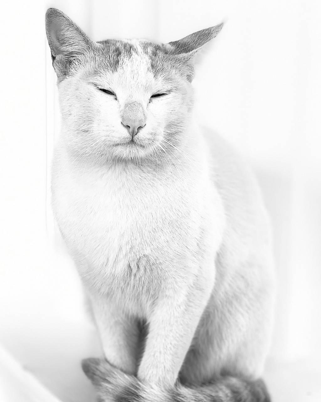 Cat High Key