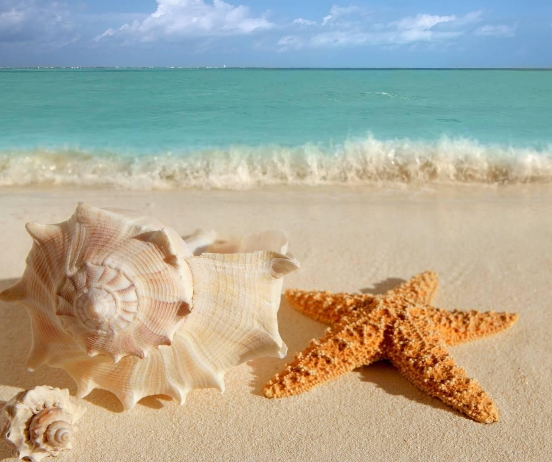 Conch Starfish Beach