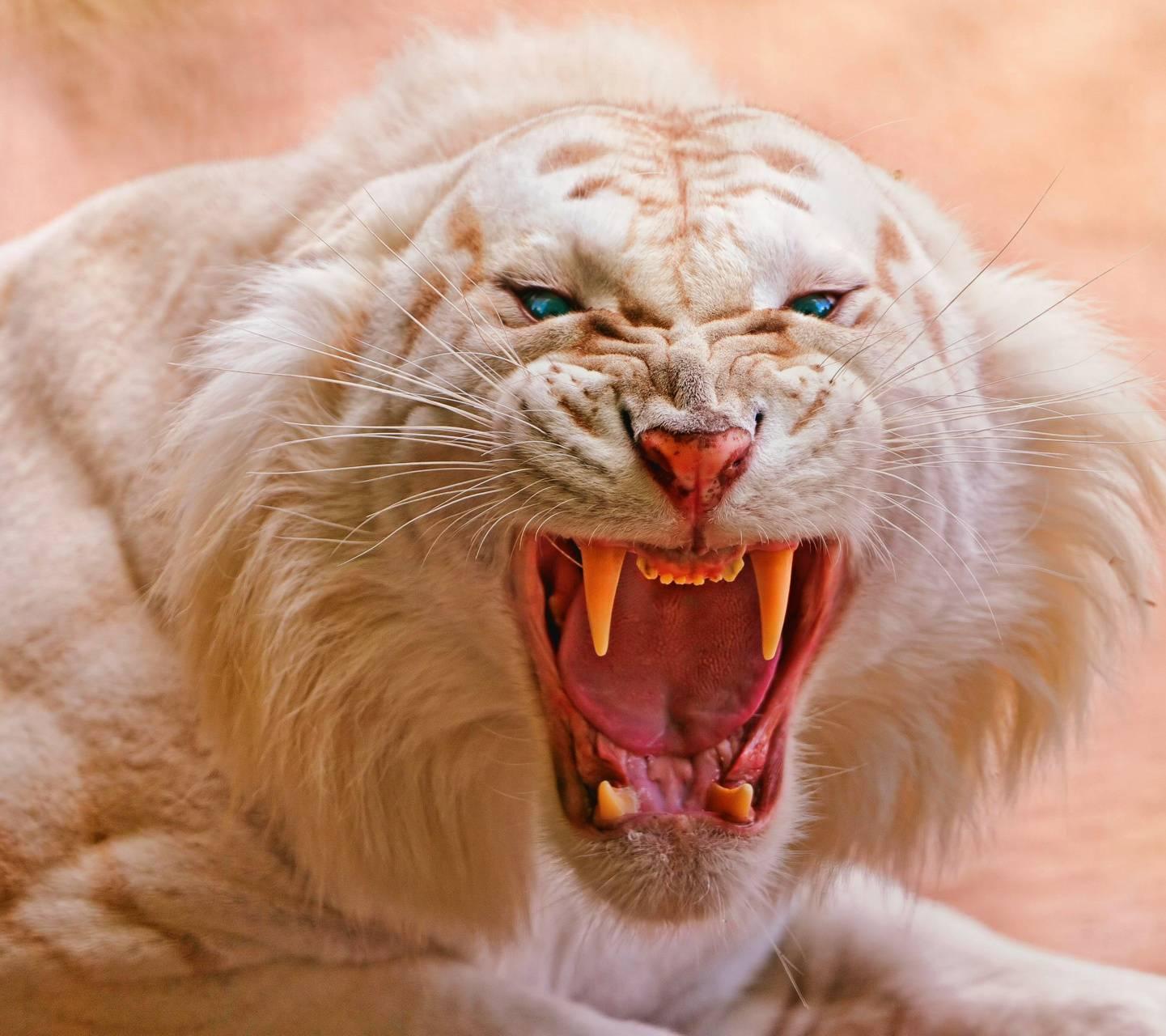 Deadly White Tiger