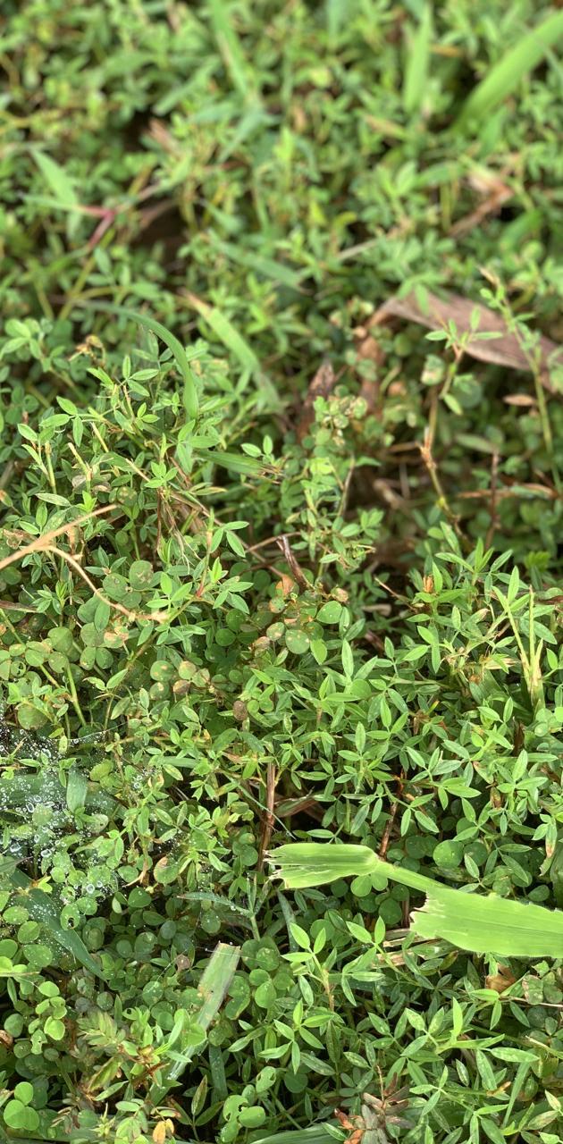 Grassy patch