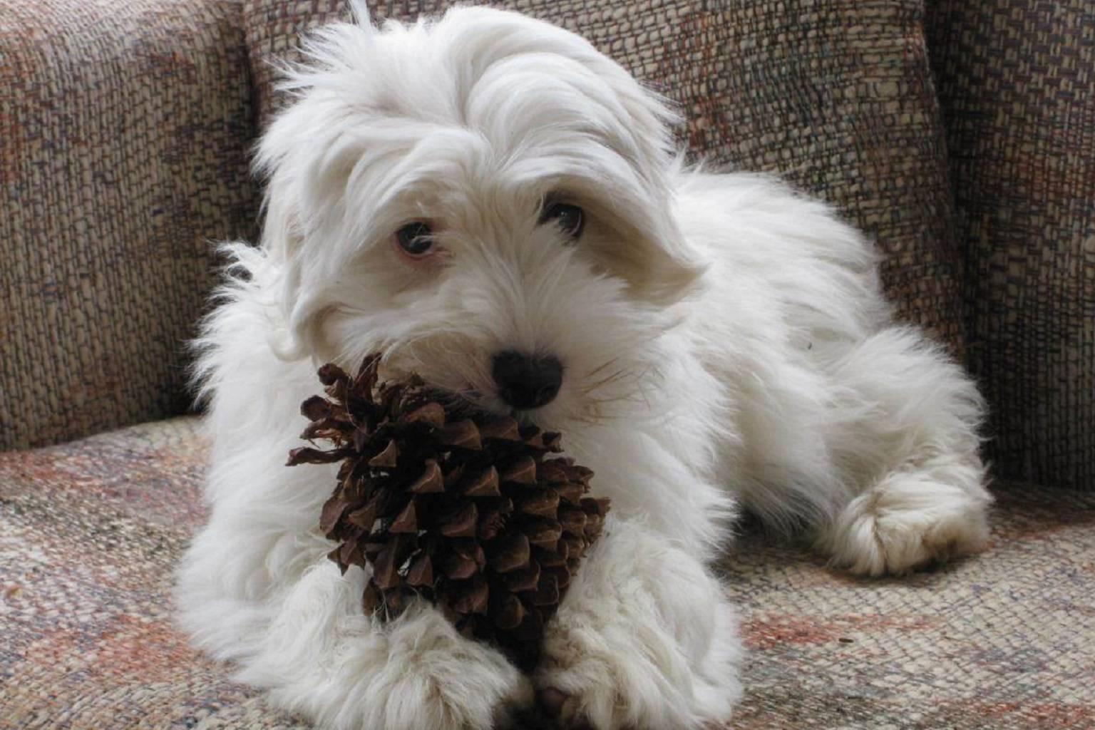 Pine Cone Puppy