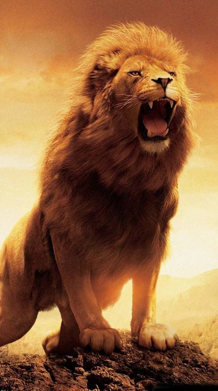 Roaring Lion Wallpapers Free By Zedge