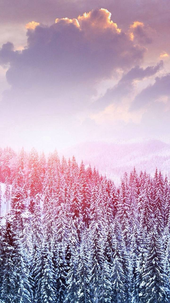 Snowy Forest Wallpaper By Yelenaxrusskhaya 64 Free On Zedge