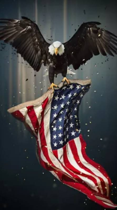 Eagle American Flag Wallpapers Free By Zedge