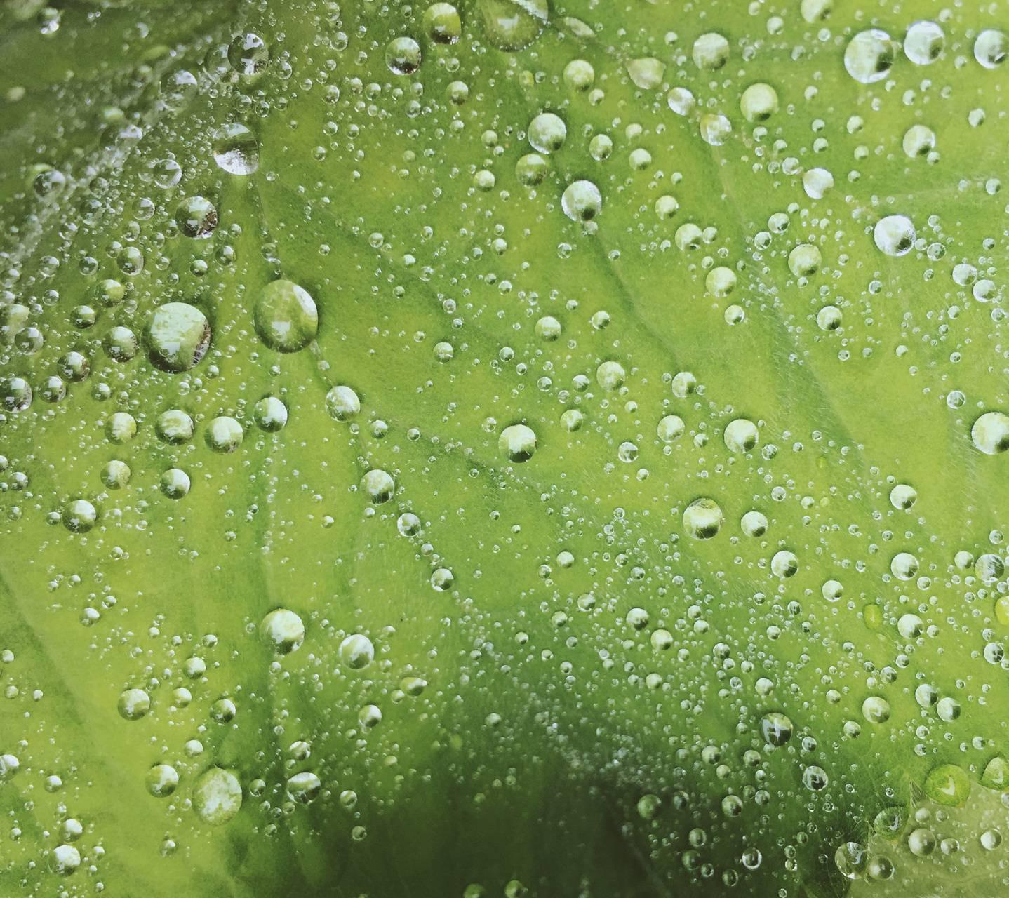 Beautiful Dew
