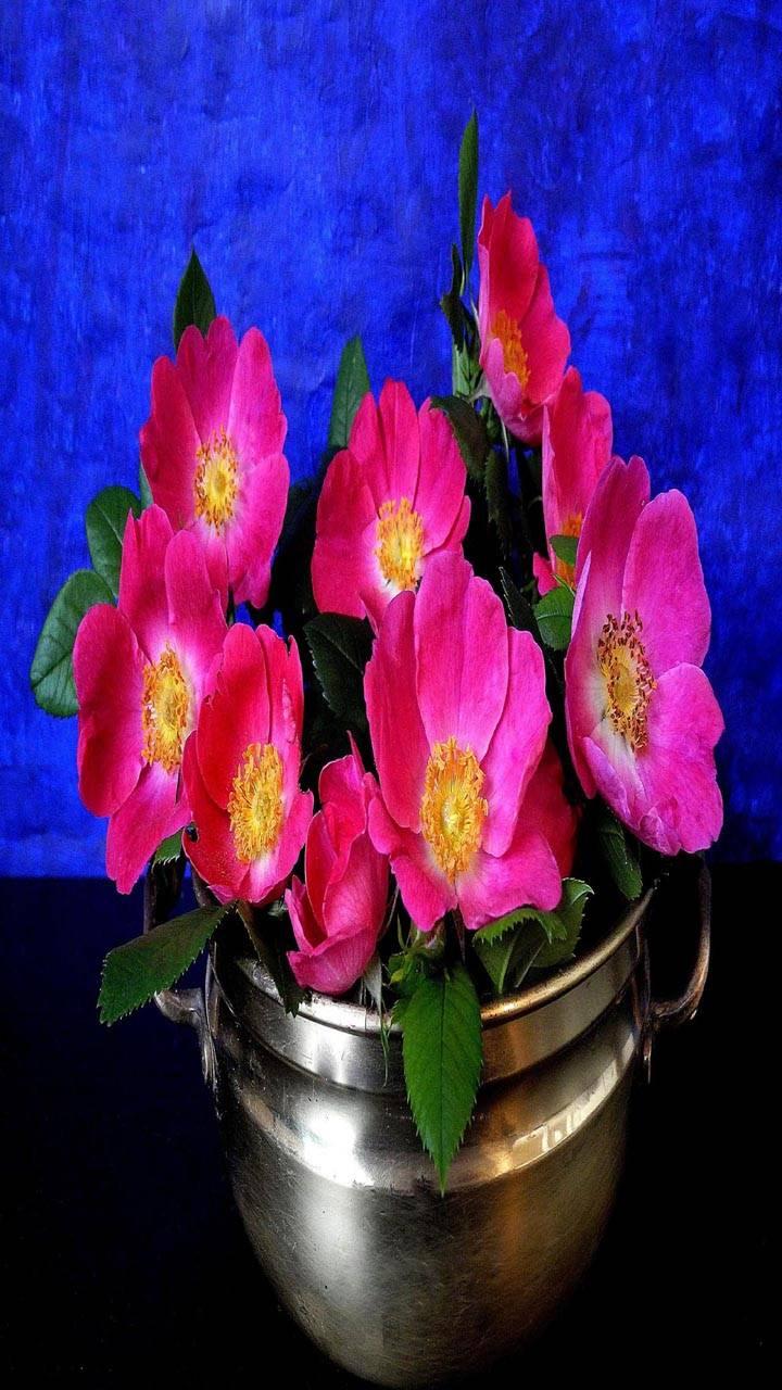 Pink flowers vas