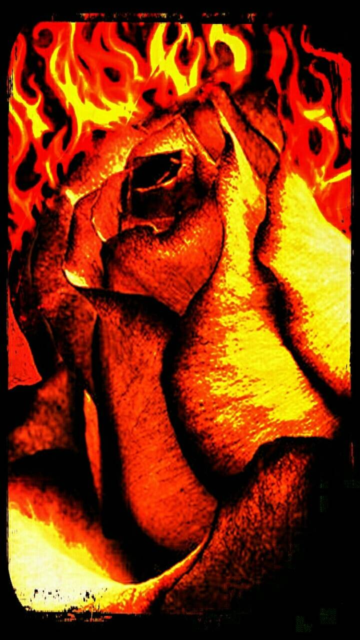 Burning Rose