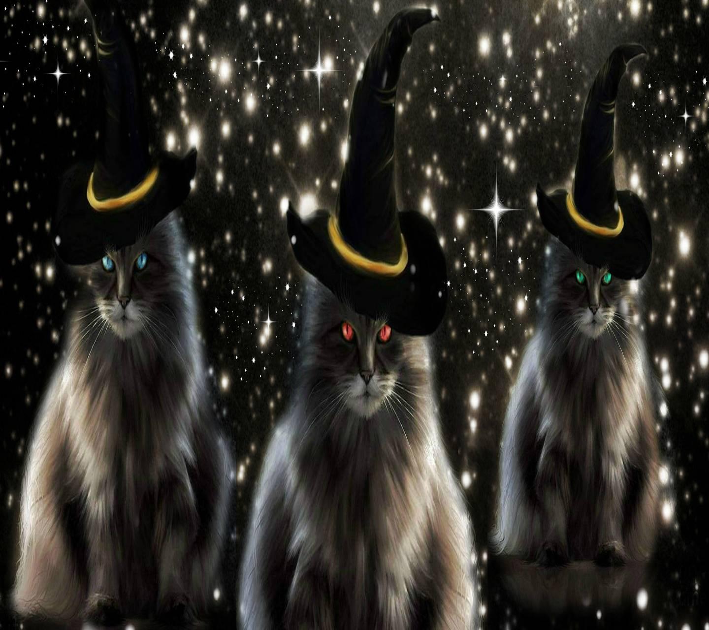 Halloween Kittys