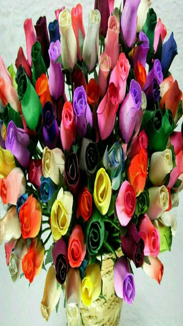 colourful Roses 4 u