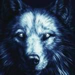 shadowwolf47