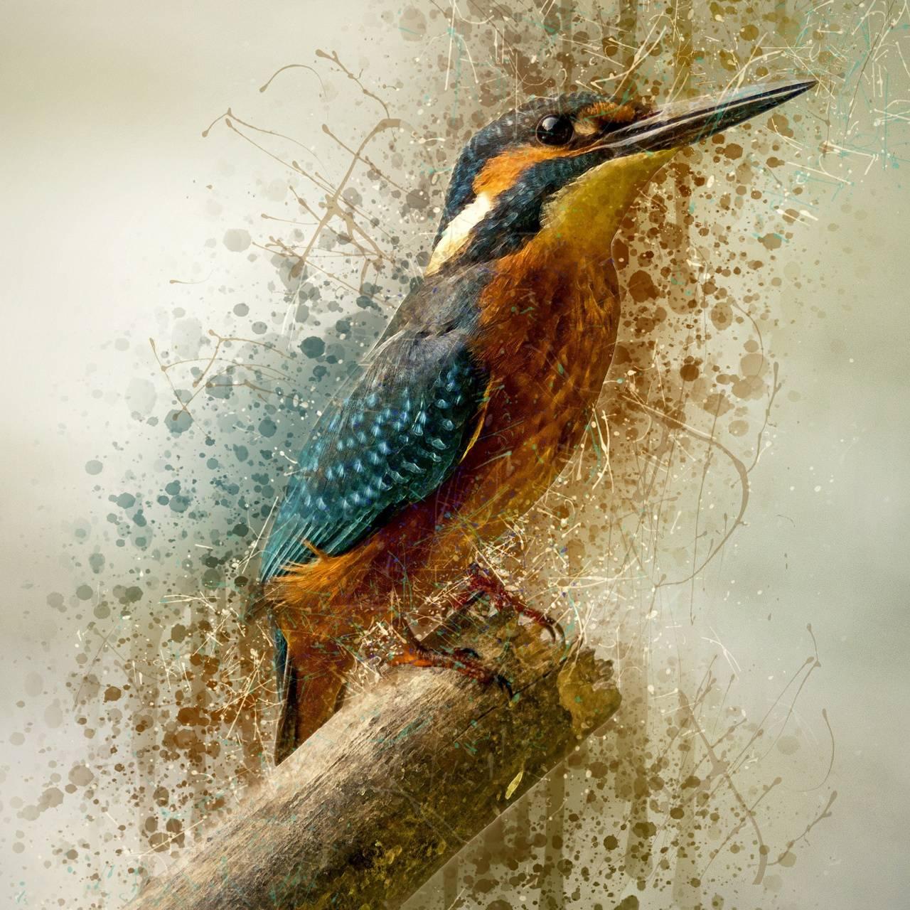 Art Kingfisher