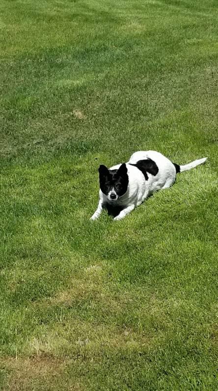 Dog summer time