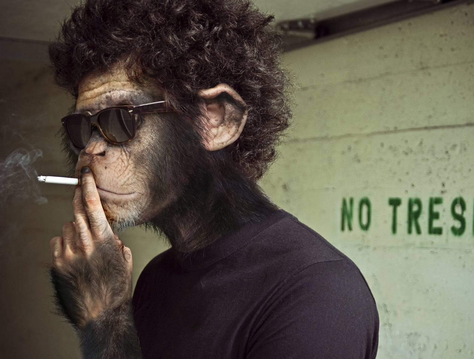 monky smoking