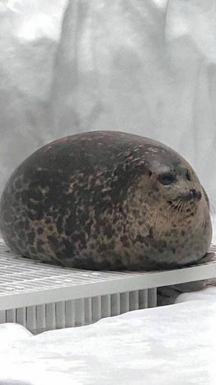 Fat seal