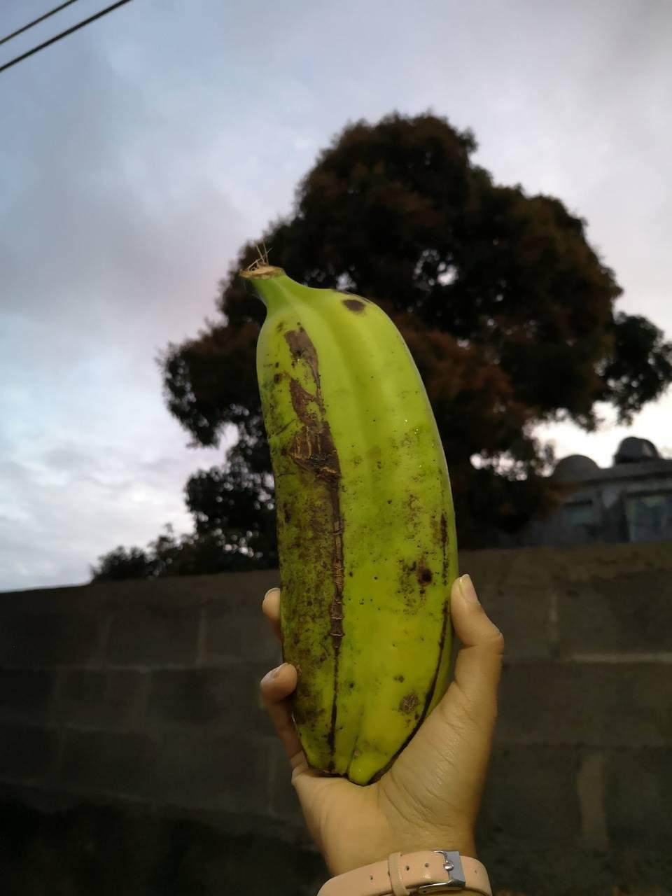 Double Banana