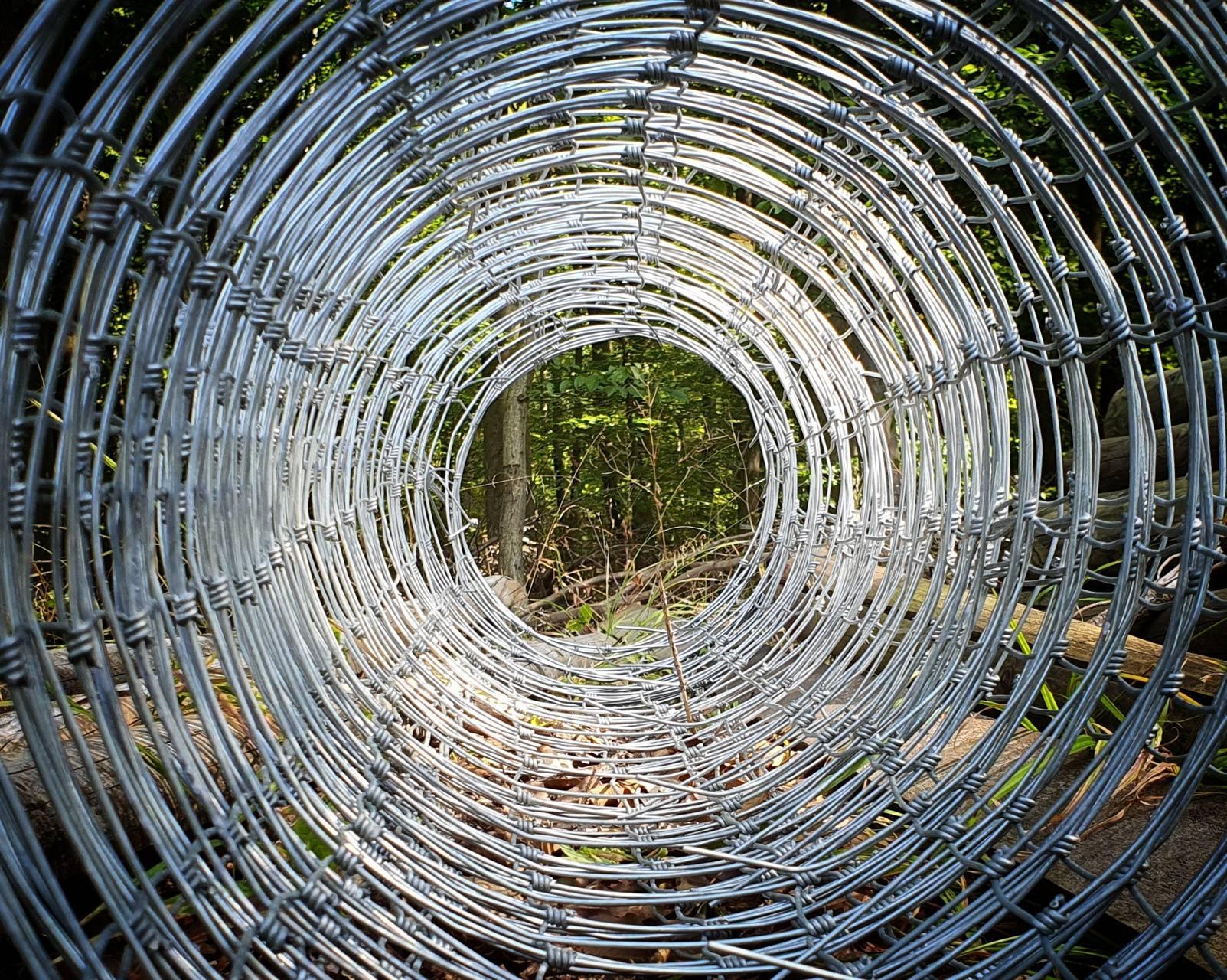 Spirale im Wald