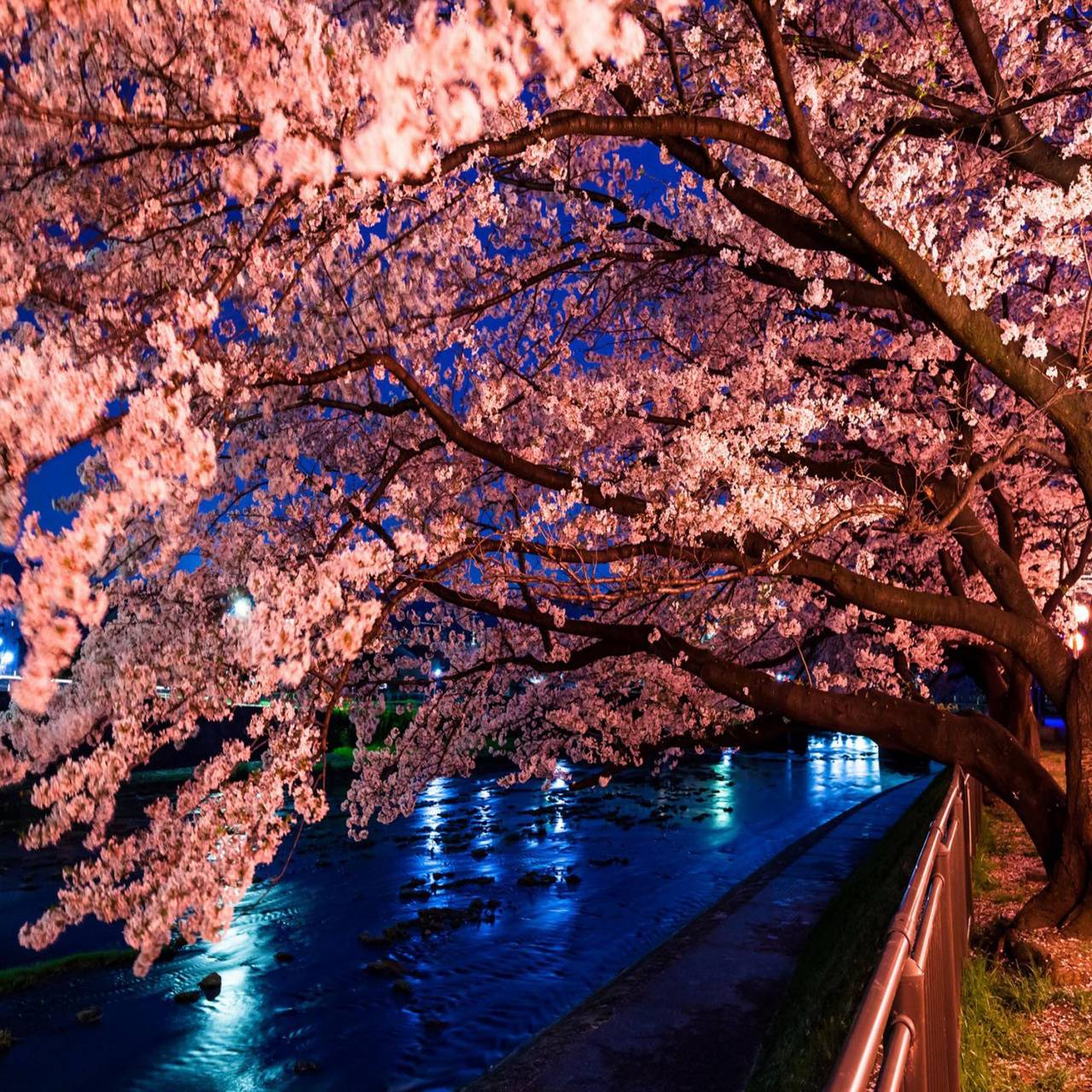 Trees River Blossoms