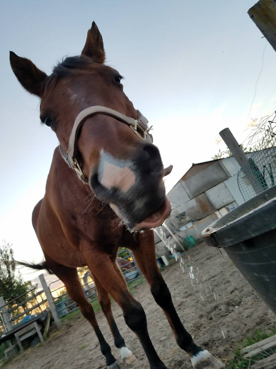 Bree my silly horse