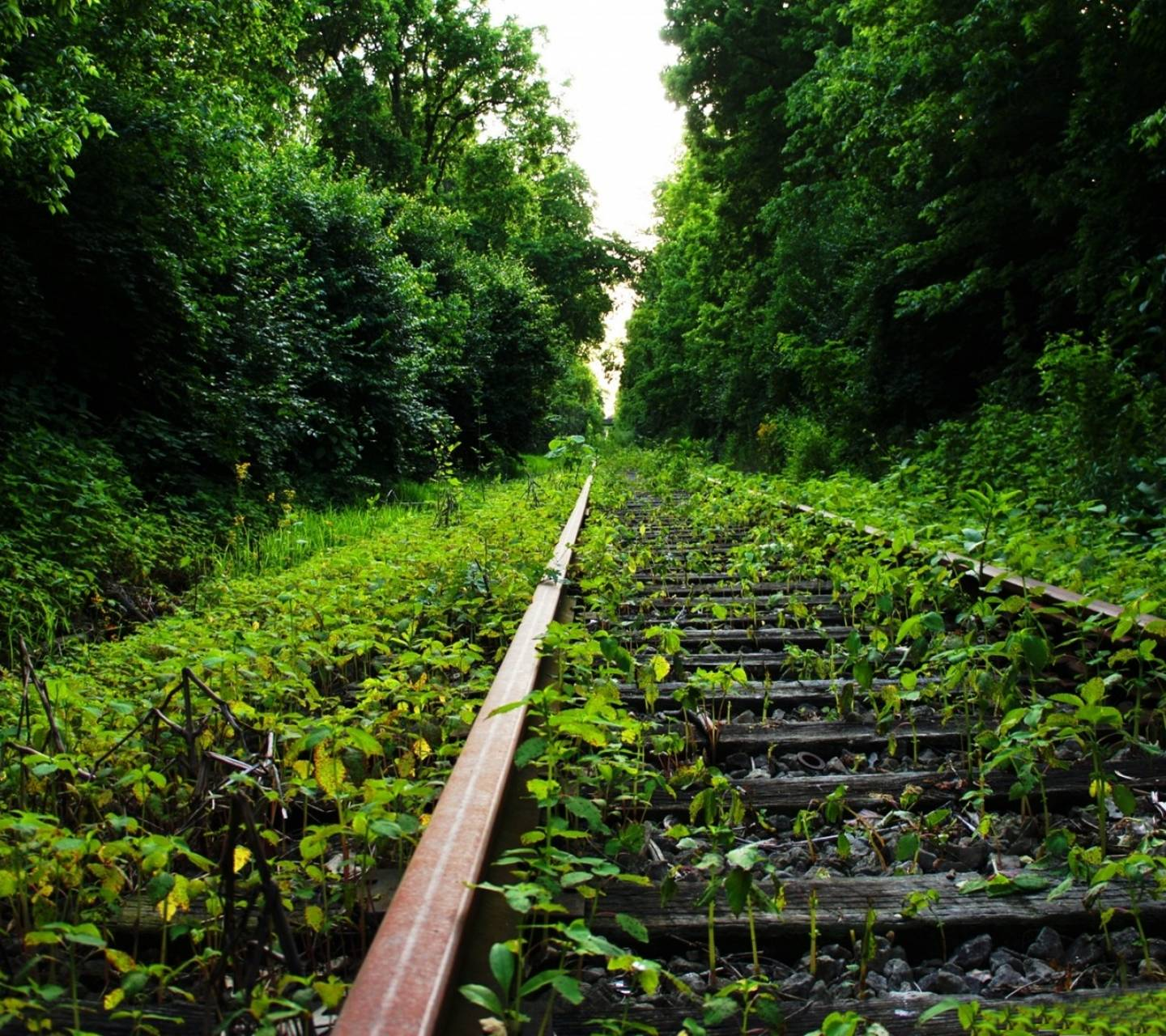 old train road