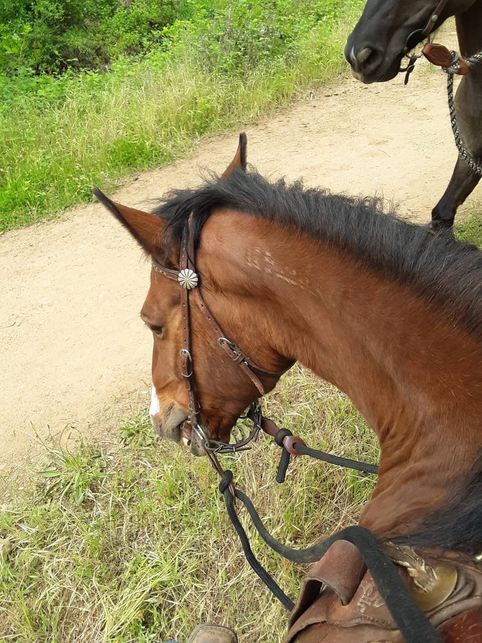 Love horses 4 ever