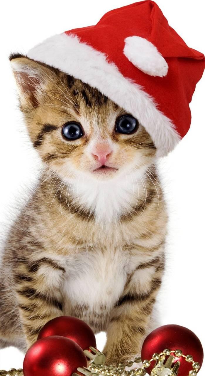 chrismas cat