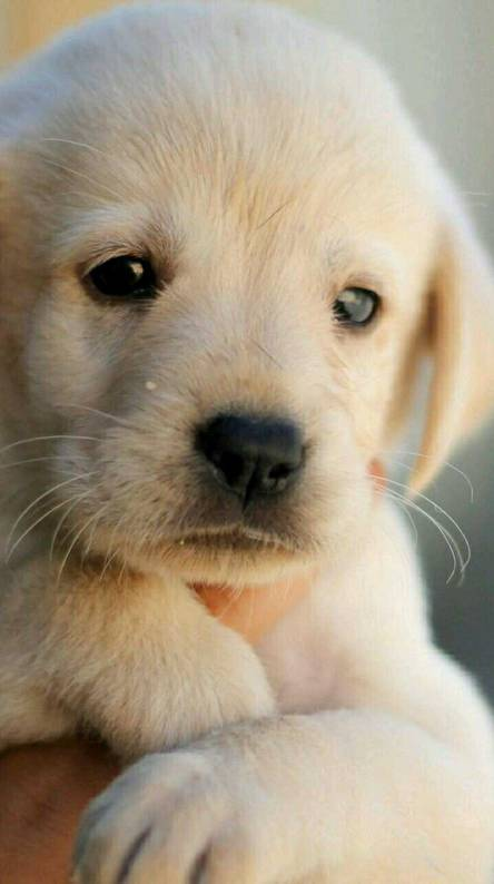 Puppy Wallpapers Free By Zedge