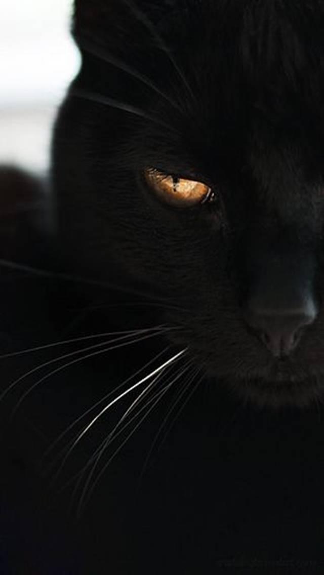 Открытки, картинки с черными кошками на аву