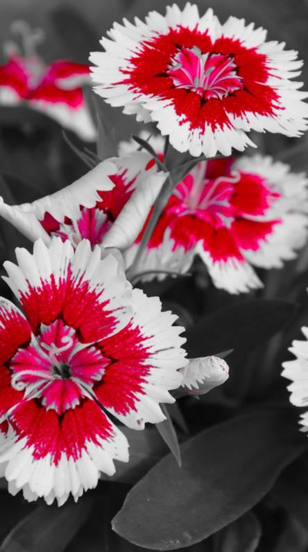 Flovely Flower