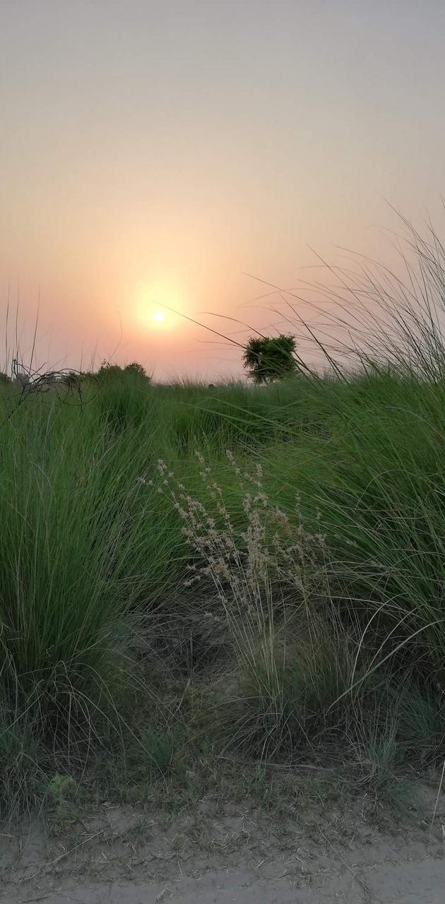 Nature and Sunset