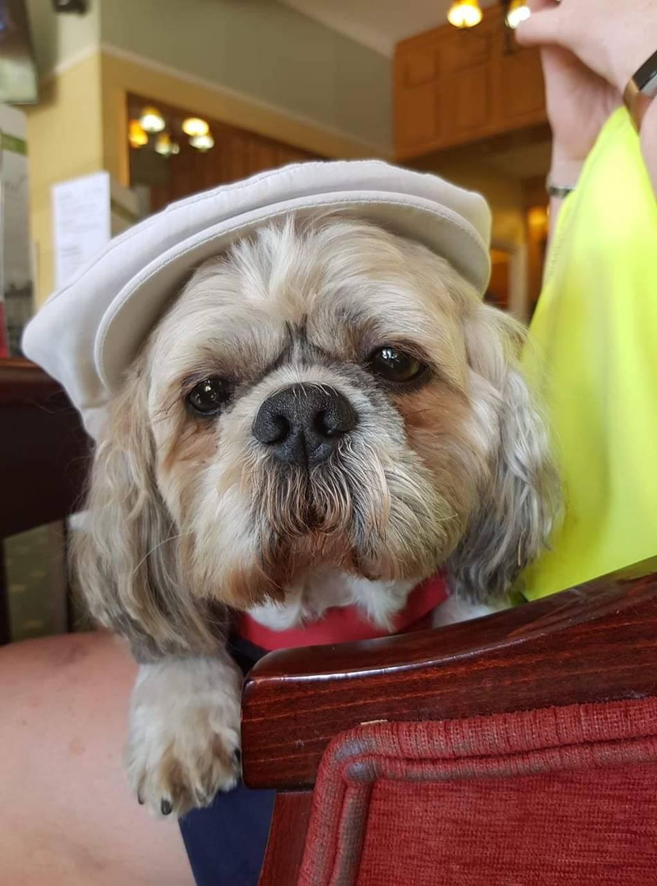 Harvey in a cap