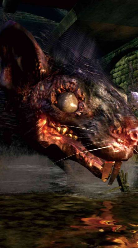 Dark Souls Rat