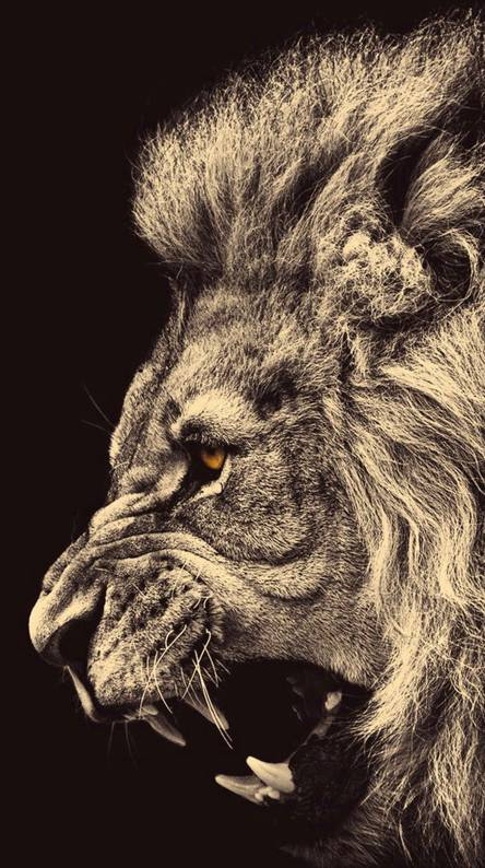 lion wallpaper android