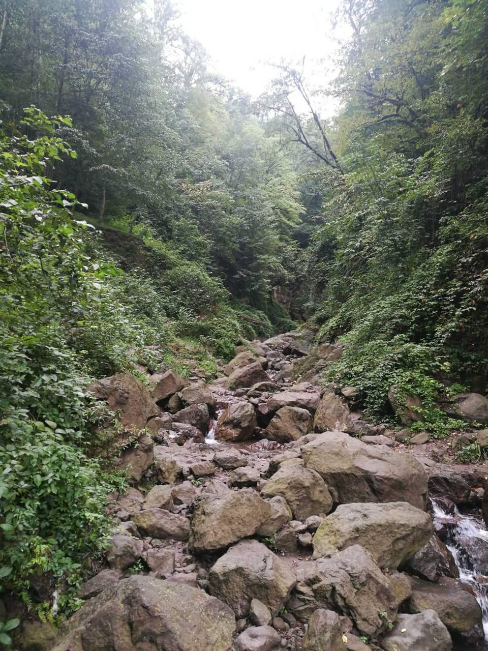 Iran forests