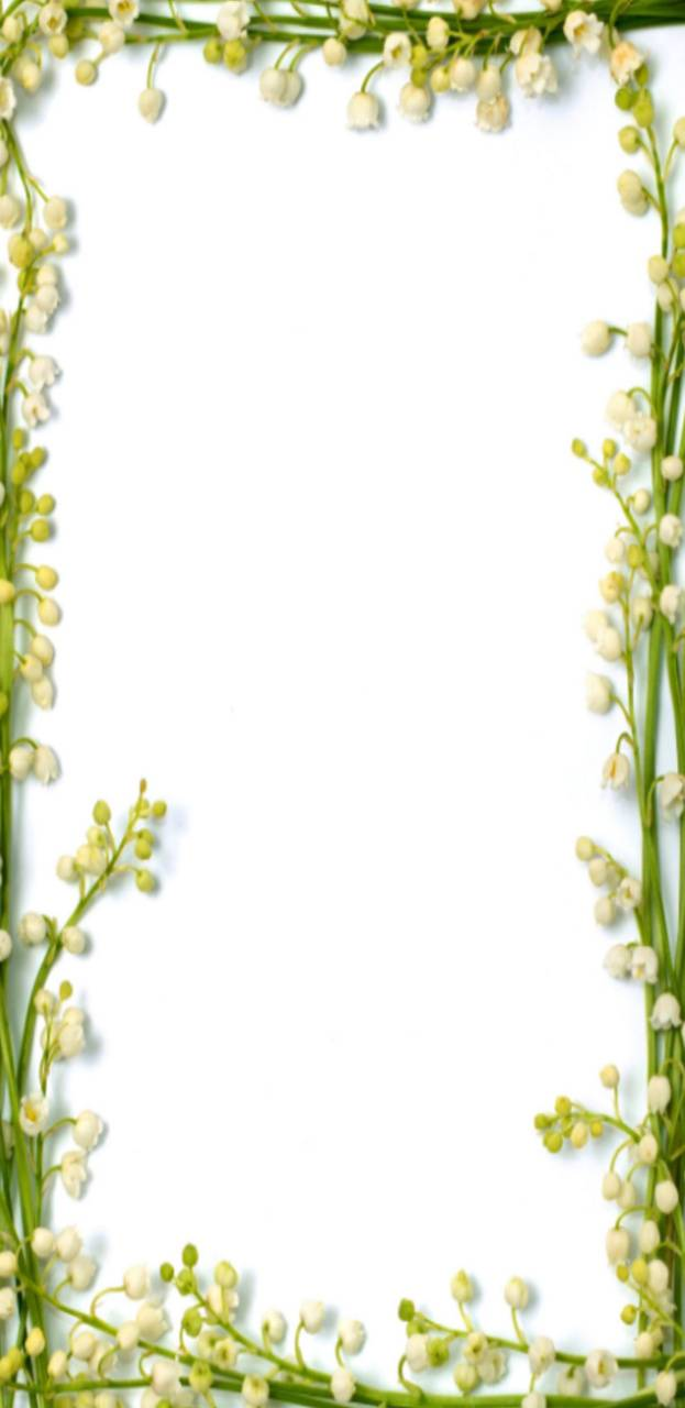Yellowflowerborder