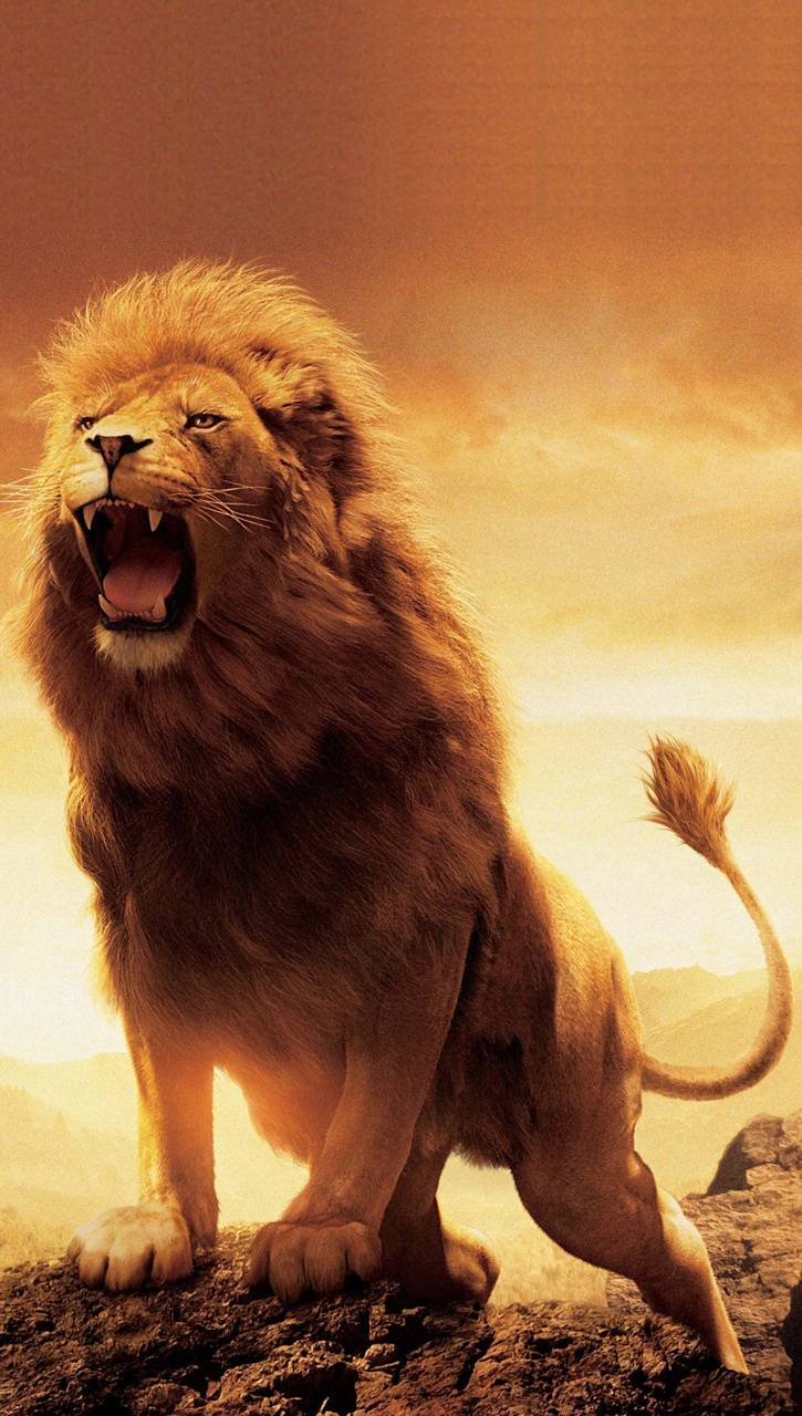 Narnia aslan wallpaper - SF Wallpaper
