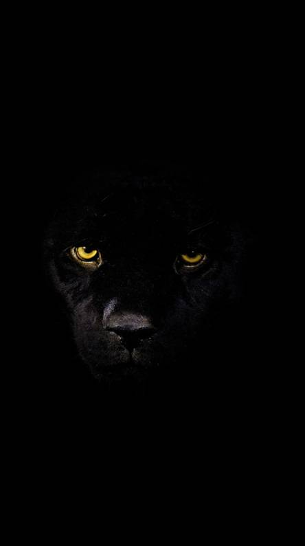 Black Tiger Ringtones And Wallpapers Free By Zedge